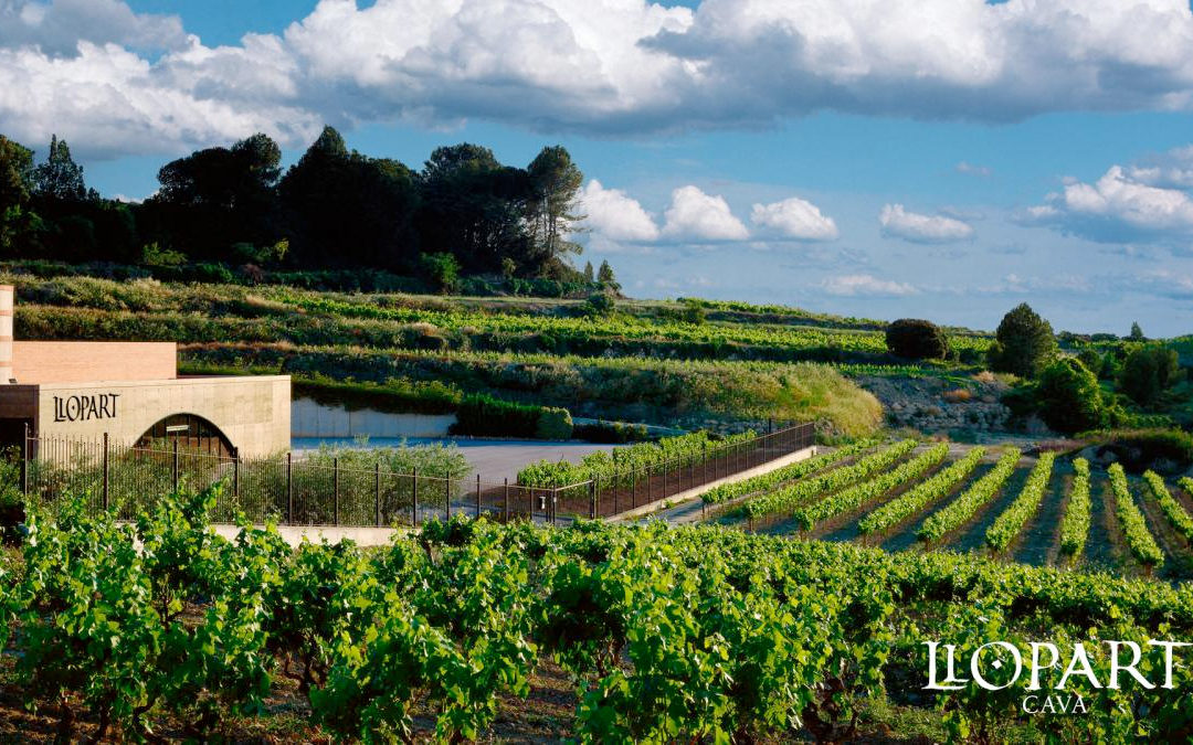 Vinum distribuidor de Bodegas Llopart en Menorca